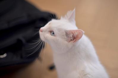 the-Little-Cat_image004.jpg