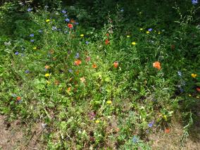"""Wochenende der """"Offenen Gärten""""                         am 19. und  20. Juni 2021"""