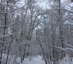 Winter in der Siedlung - Eindrücke vom 30. 01. 2021