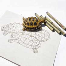 Todd The Tortoise.jpg