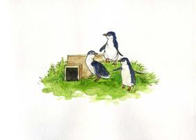 Oamaru Blue Penguin Colony.jpg