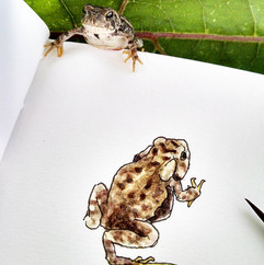 Pennsylvania Toad.jpg