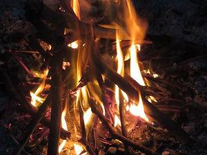 Jaguar Amazon Tours Manaus Brazil Jungle Survival Tour Fire