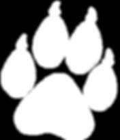 Jaguar Amazon Tours Footprint for Day Trip