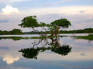 Jaguar Amazon Tours Manaus Brazil Ararinha Lake