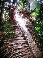 Jaguar Amazon Tours Manaus Brazil Adventure Tour Palm Leaf Fire Shelter