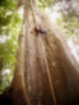 Shawn in Tree.jpg