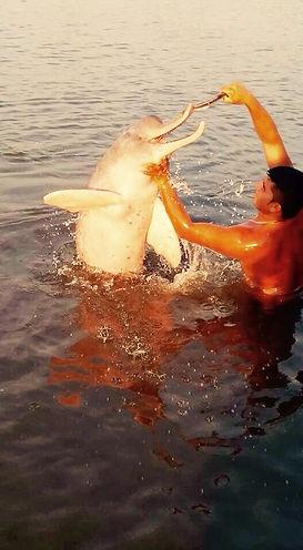 Jaguar Amazon Tours Manaus Brazil Day Trip Feeding Pink Dolphin in Amazon
