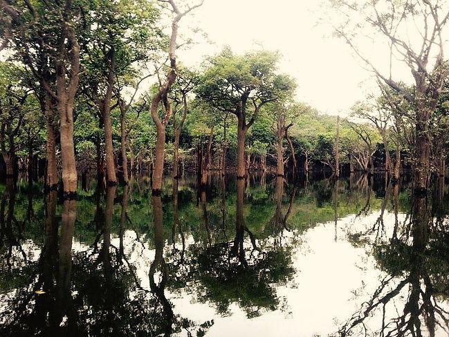 Jaguar Amazon Tours Forest