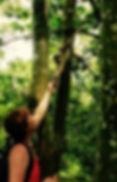 Monkey Jaguar Amazon Tours Manaus Brazil