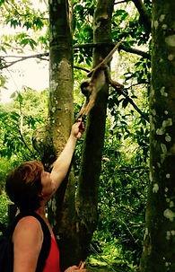 Jaguar Amazon Tours Manaus Brazil Day Trip Feeding Monkey