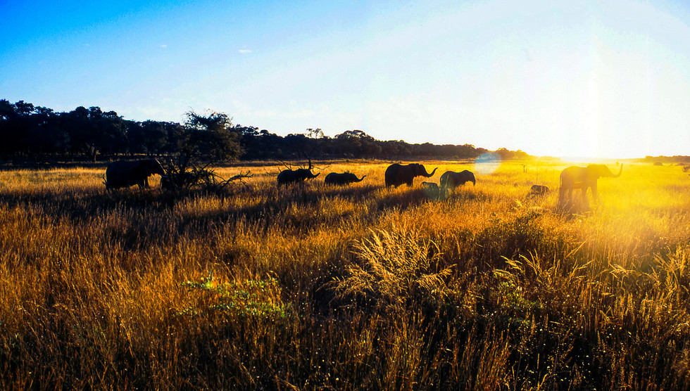 Elephants at Sunrise