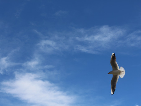 Las alas son para volar
