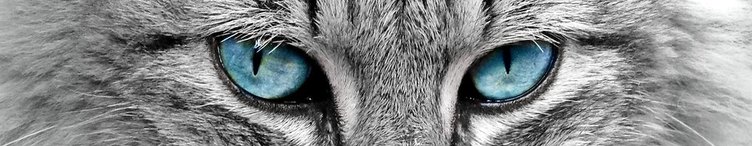 animal-cat-eyes-33537.jpg