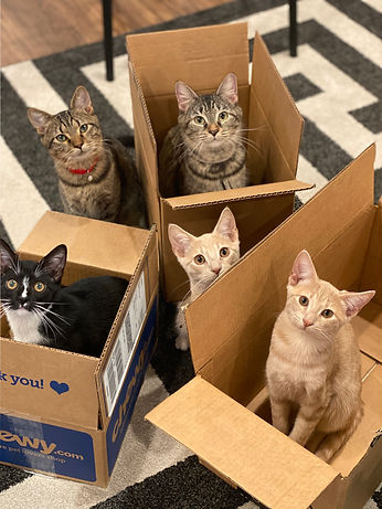 cats in a box.jpg