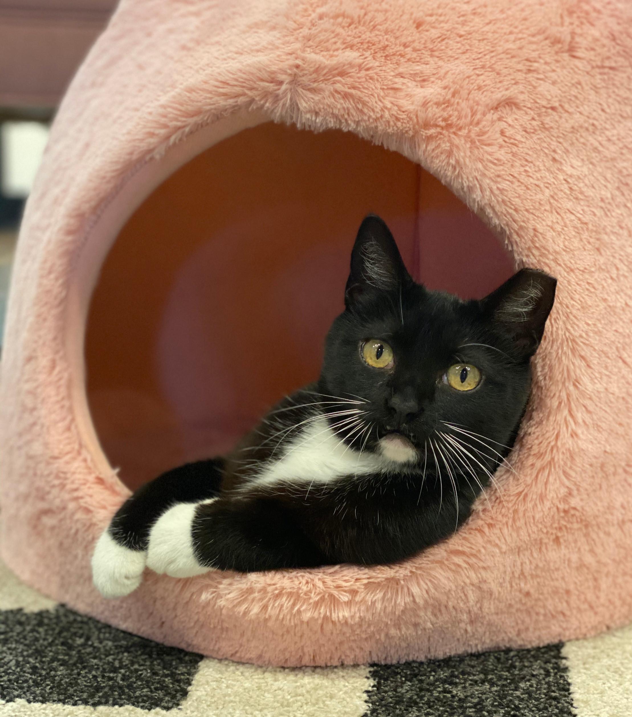 Cat Lounge-Sunday (ages 7+)