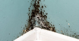 black mold growing on a wall - indoor air quality investigation and testing