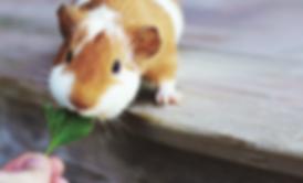 La médiation animale, une approche différente