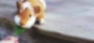 Guinea Pig Boarding - Angelcare Pet Vet