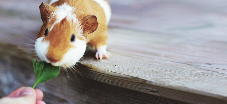 Small Animal Grooming