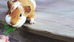 PSI Guide to Guinea Pigs (Cavies)