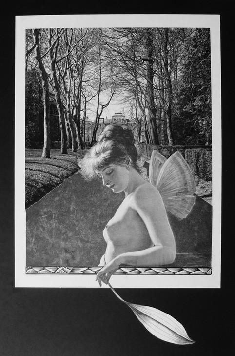 Fairy Leaf