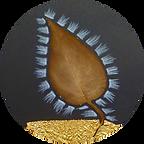 hojas circle.png