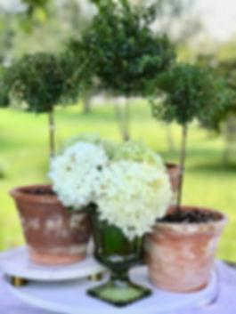 Topiary 5.jpg