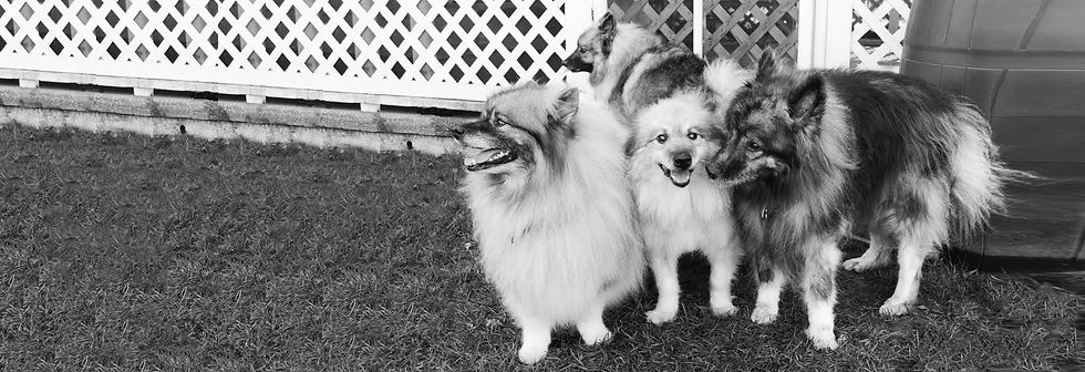 cape-may-party-dogs-bw-no-text.jpg