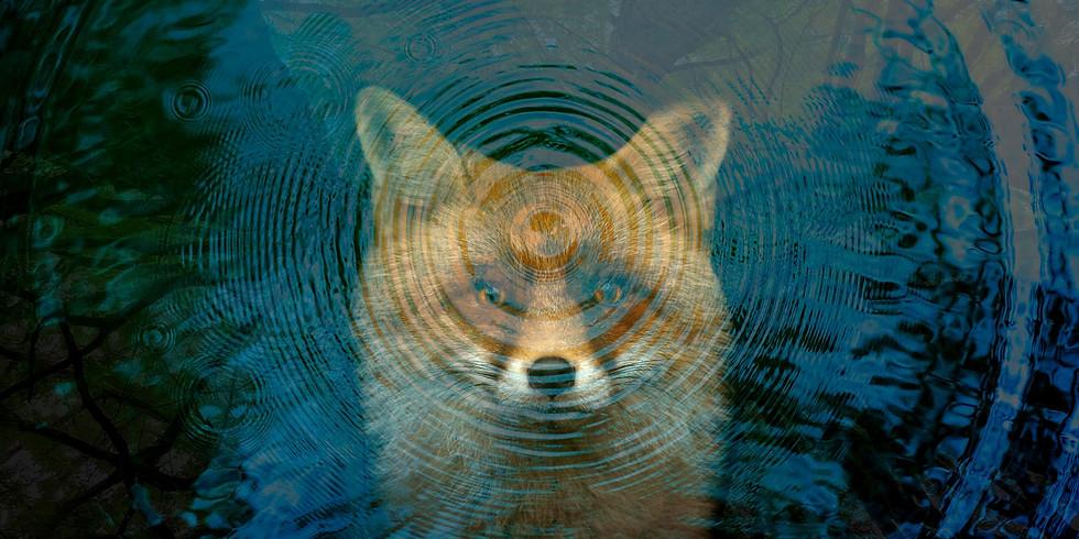 Fox Walkers