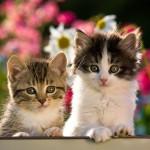 kelnet cats.jpg