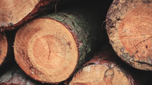 Lumber prices, production addressed in Virginia