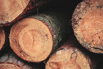 Closeup of freshly cut logs