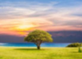 tree-2435269_1920.jpg