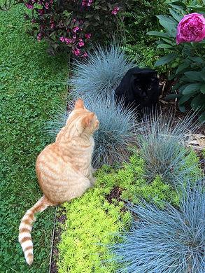 george-cats.JPG