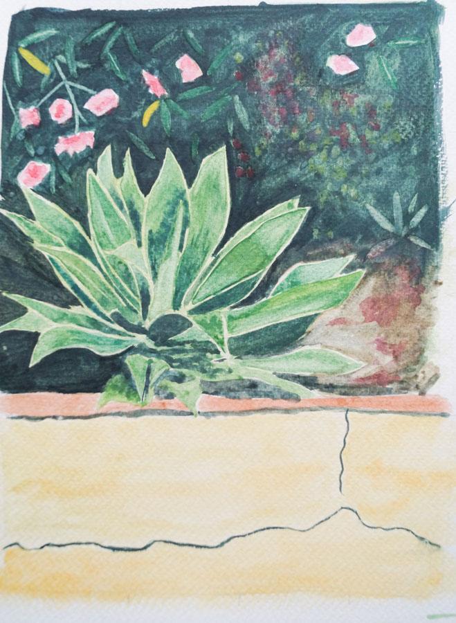 annie audsley agave water colour