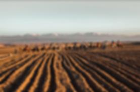Screen Shot 2020-01-23 at 9.16.58 AM.png