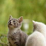 cat-2273598_1920.jpg