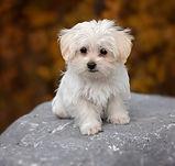 dog-1037702_1920.jpg