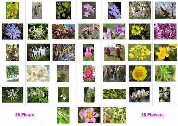 38 fleurs.... 38 remèdes