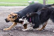 Qu'est que l'agressivité canine ?