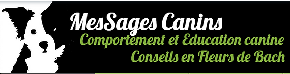 https://www.messagescanins.com