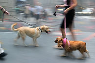 Education canine en cours collectif