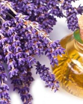 lavender-oil-500x500.jpg