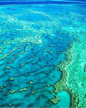 Coral-Reef-Fragrance-Oil__10166.14573893