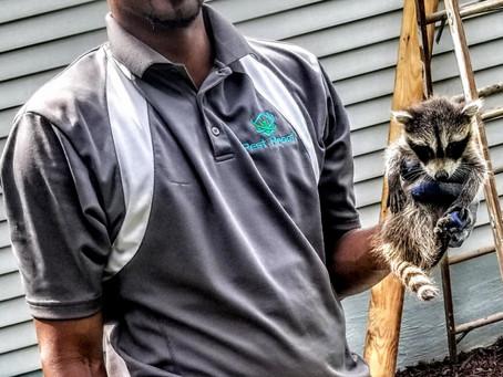 How Can My Family Avoid Raccoons