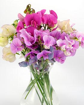 sweet-pea-fragrance-oil.ts094.jpg
