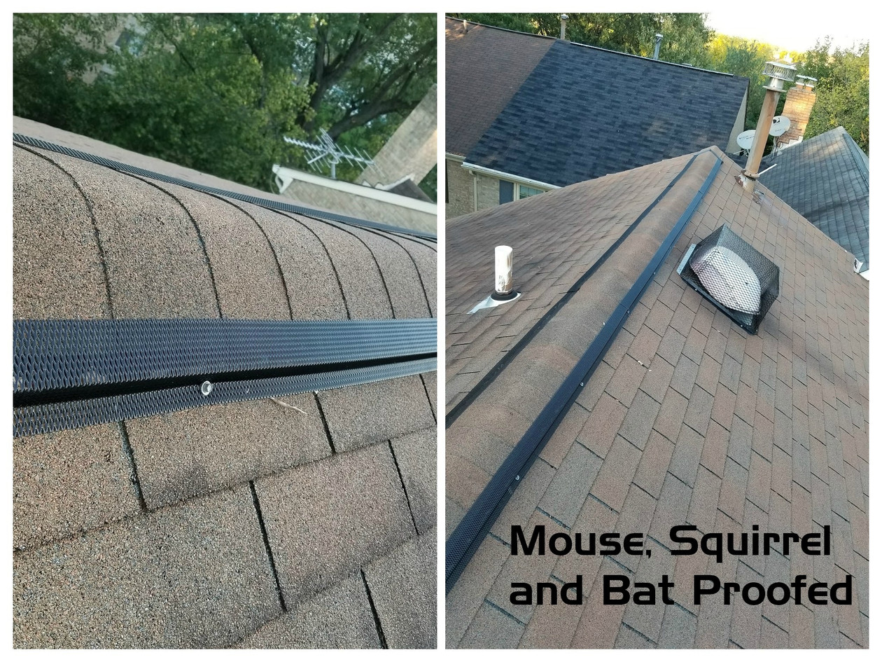 Mouse, Squirrel and Bat Proofed