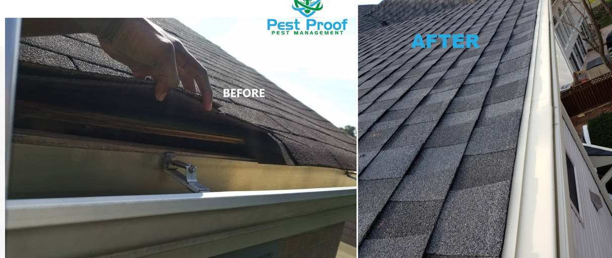 Gutter and Roof Repairs