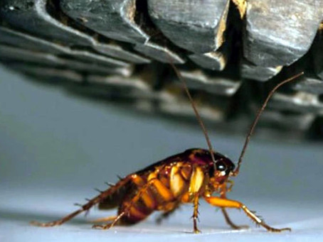 Stop Cockroaches from Heading Indoors This Fall